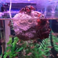 Lava Stone Rock with Moss - Aquariums Decoration